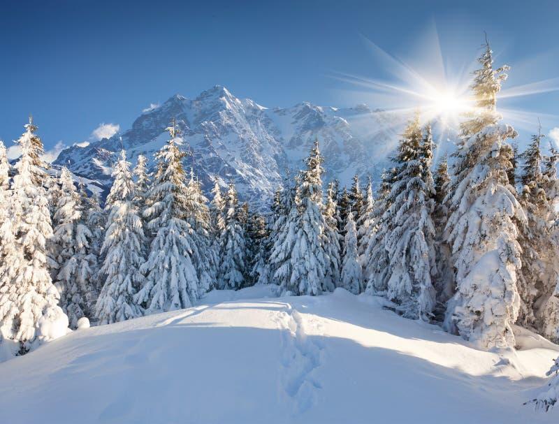 在巨大的山的美好的冬天风景 免版税图库摄影