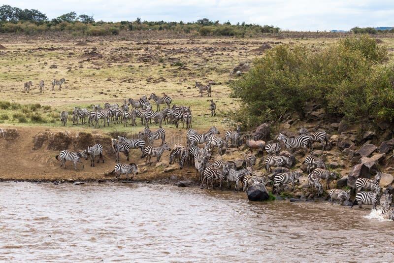 在巨大迁移道路的防水层  肯尼亚mara马塞语 库存图片