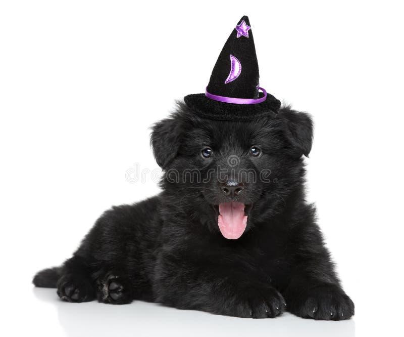 在巫术师帽子的小狗在白色背景 库存照片