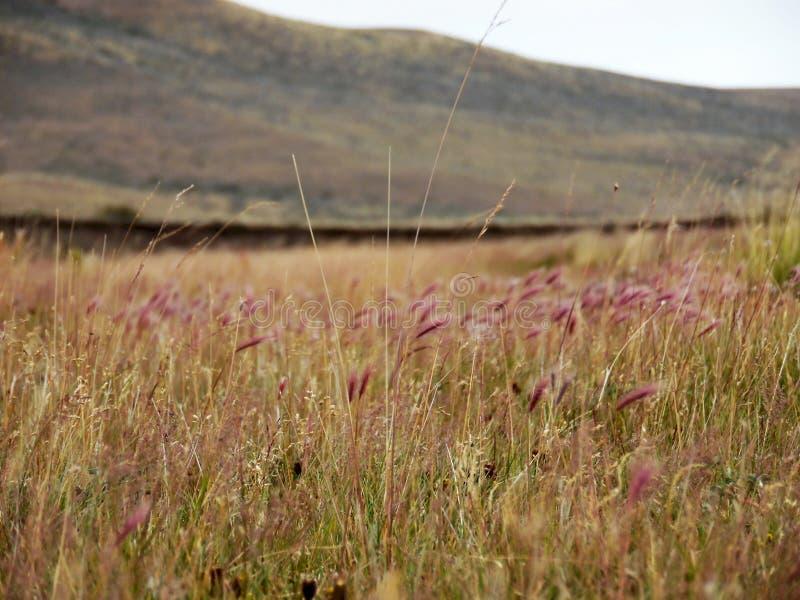 在巴塔哥尼亚的草平原 免版税图库摄影