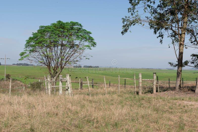 在巴西-阿根廷边界的农村风景 库存图片