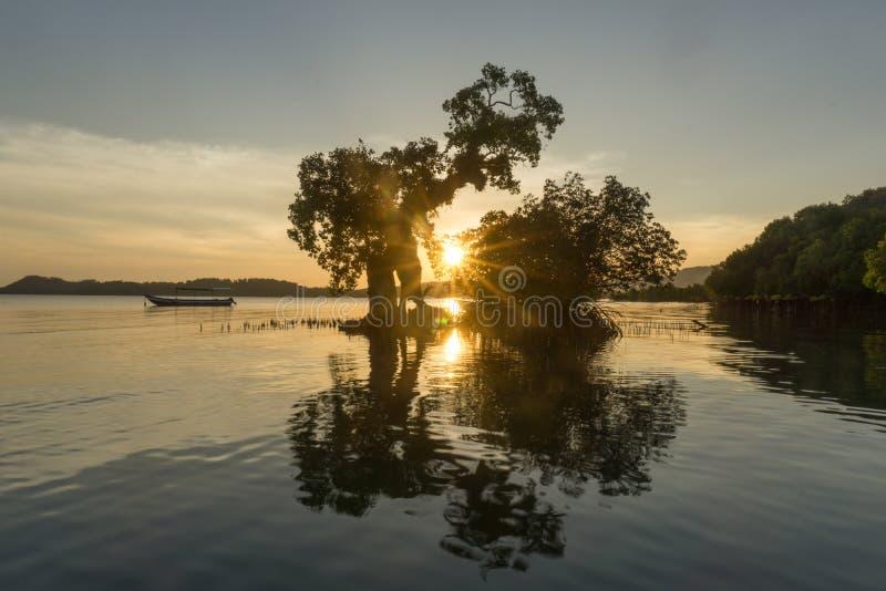 在巴韦安岛的树, Gresik,印度尼西亚 图库摄影