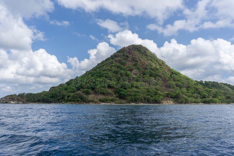 在巴韦安岛的树, Gresik,印度尼西亚 免版税库存照片