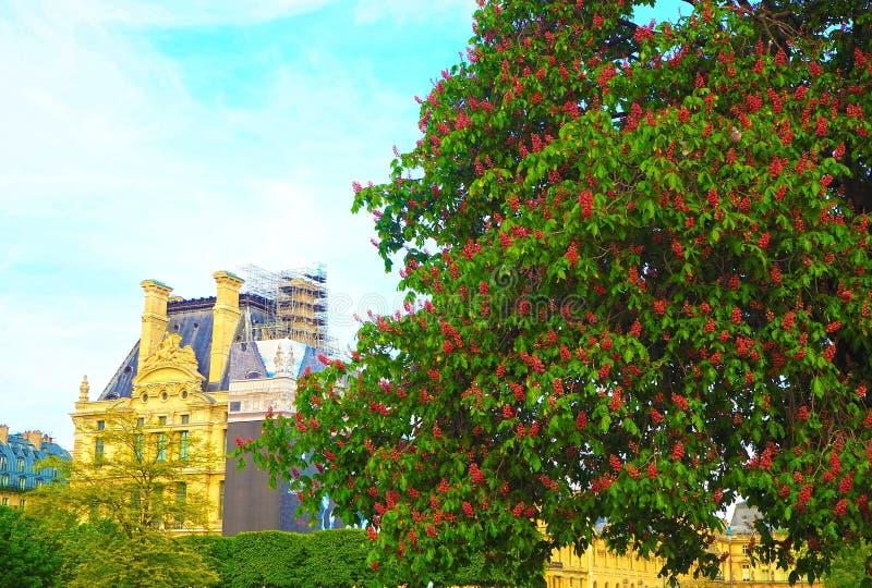 在巴黎,红色栗子反弹在Tuileries庭院里在巴黎,法国 库存照片