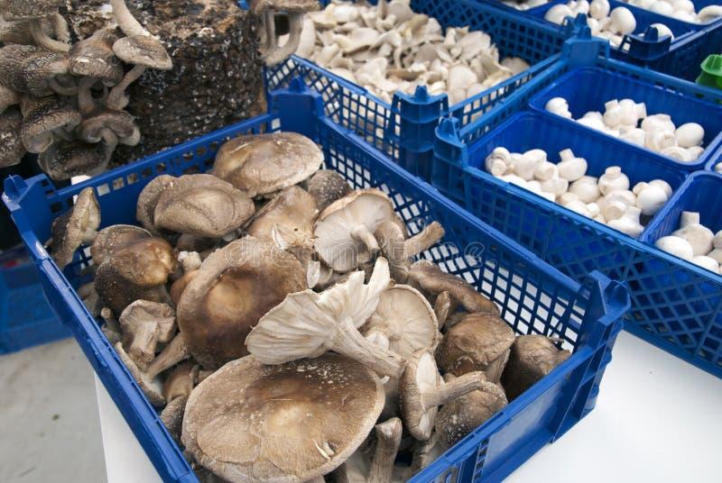在市场上的蘑菇 图库摄影