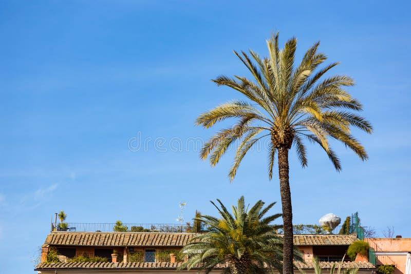 在市的屋顶露台有pam树的罗马意大利在晴朗 库存图片