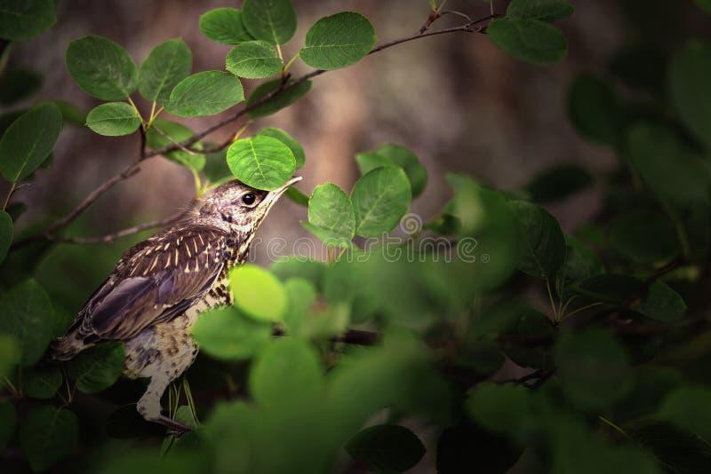 在布什的一只鸟,照料自然 免版税图库摄影