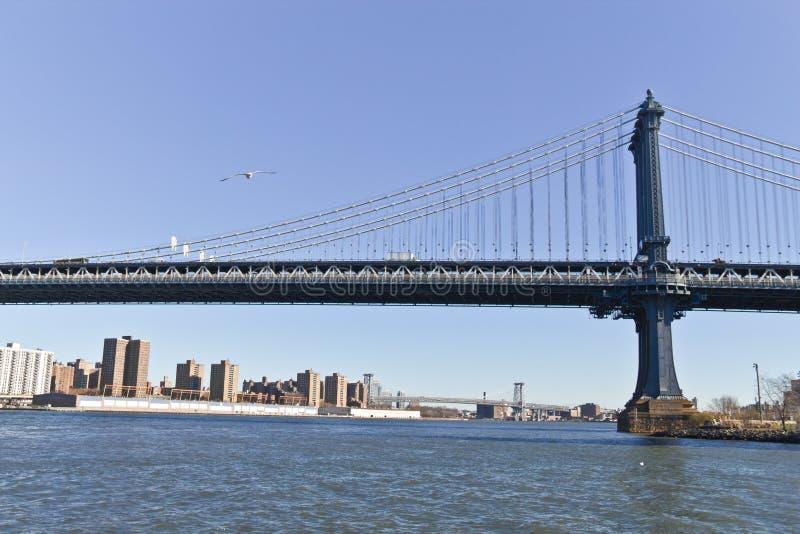 在布鲁克林大桥的海鸥在纽约 库存图片