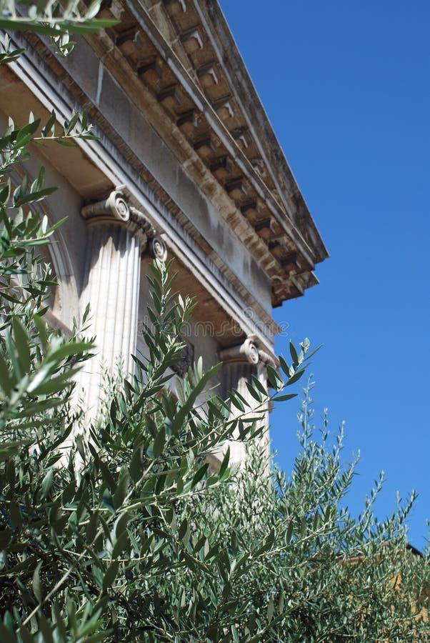 在希腊寺庙前面的橄榄叶子 免版税库存图片