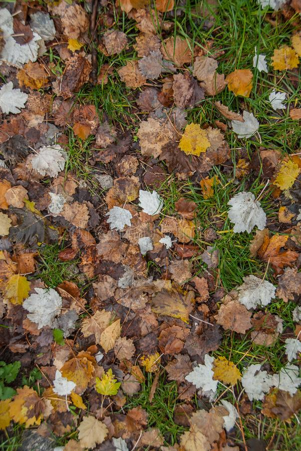 在希腊山的秋叶 免版税库存图片