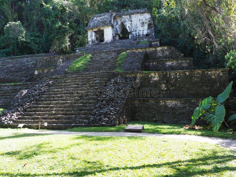 在帕伦克市古老玛雅国家公园的印象深刻的石金字塔恰帕斯州状态的在墨西哥,密林风景  免版税图库摄影
