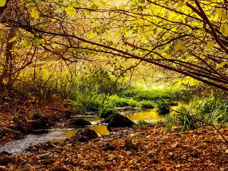 在帕拉钦,塞尔维亚附近的自然公园Grza 免版税库存图片