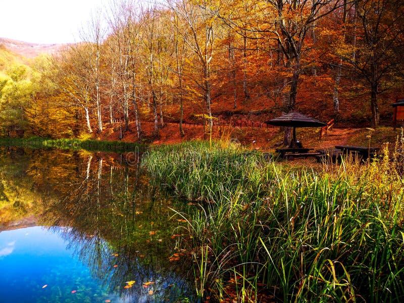 在帕拉钦,塞尔维亚附近的自然公园Grza 图库摄影