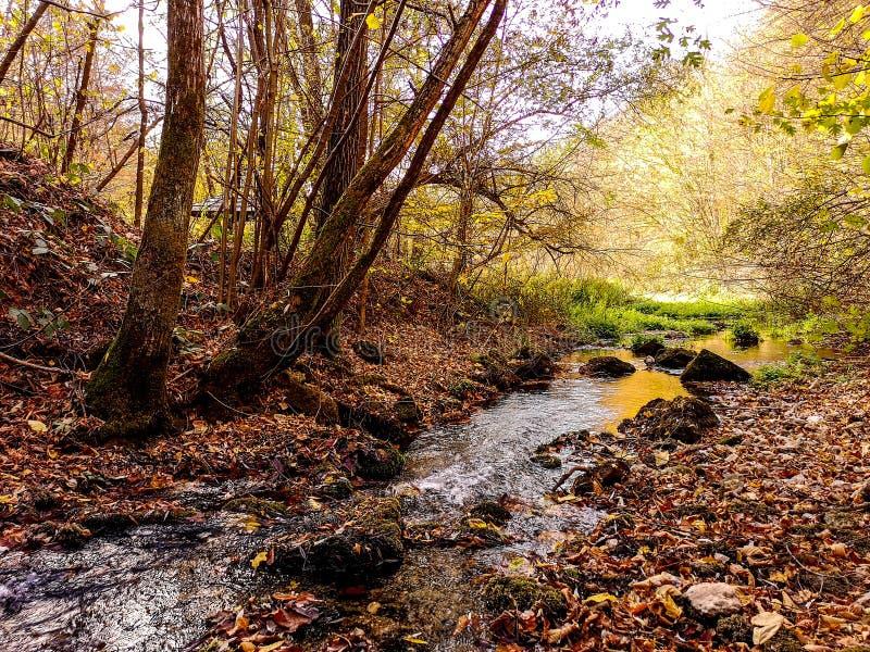 在帕拉钦,塞尔维亚附近的自然公园Grza 免版税库存照片