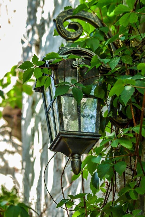 在常春藤内的壁灯 库存照片