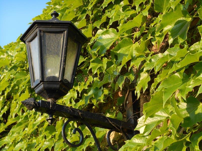 在常春藤墙壁中间的街灯 免版税库存图片