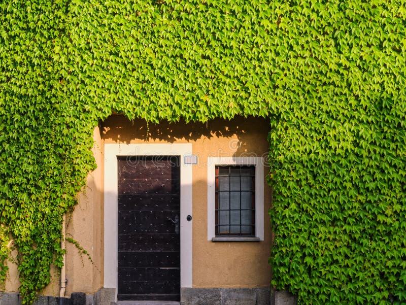 在常春藤墙壁的老房子入口 免版税库存照片