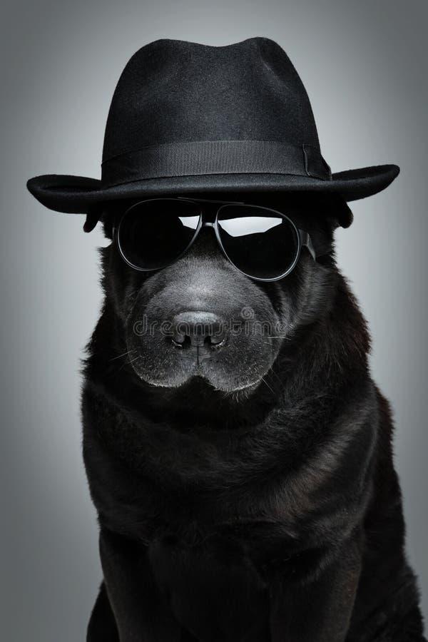 在帽子和太阳镜的狗 图库摄影