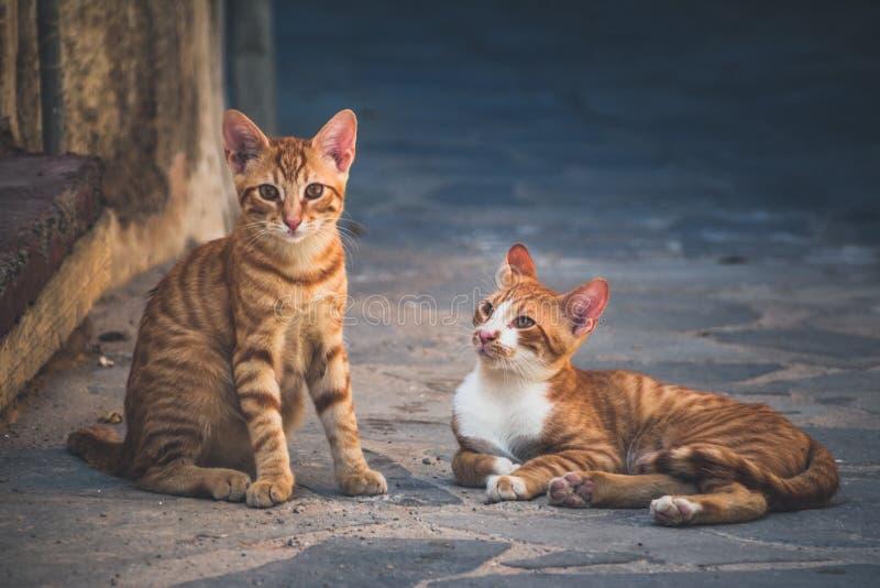 在干尼亚州,克利特海岛街道上的猫  免版税库存图片
