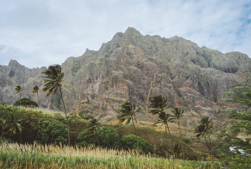 在干旱的岩石地形前面的棕榈树 巨大的贫瘠山在背景中 圣安唐岛海岛,佛得角 免版税库存照片