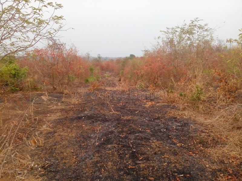 在干旱的火的灰 库存图片