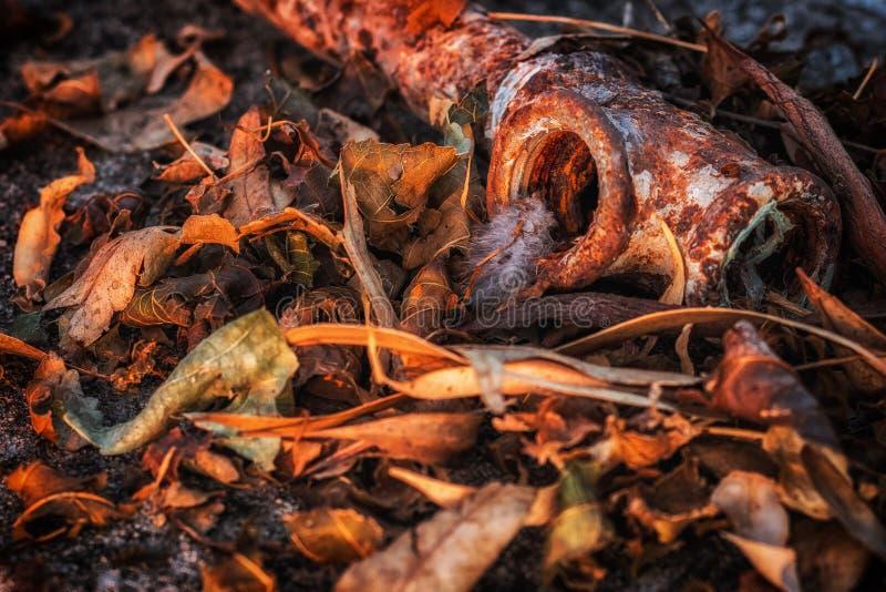 在干燥叶子的生锈的老管子在日落 免版税库存图片