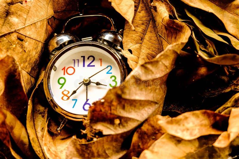 在干燥叶子的闹钟 免版税库存照片