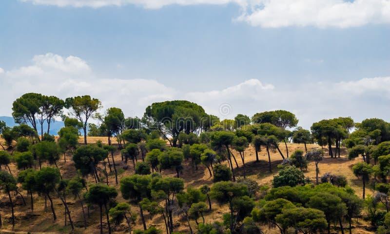 在干燥小山的稀稀落落的树反对多云天空 库存照片