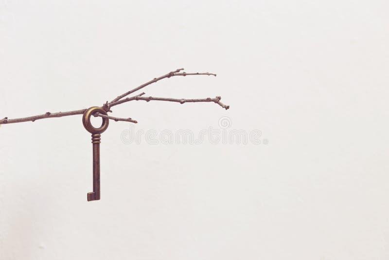 在干燥木分支的老金属钥匙 库存照片