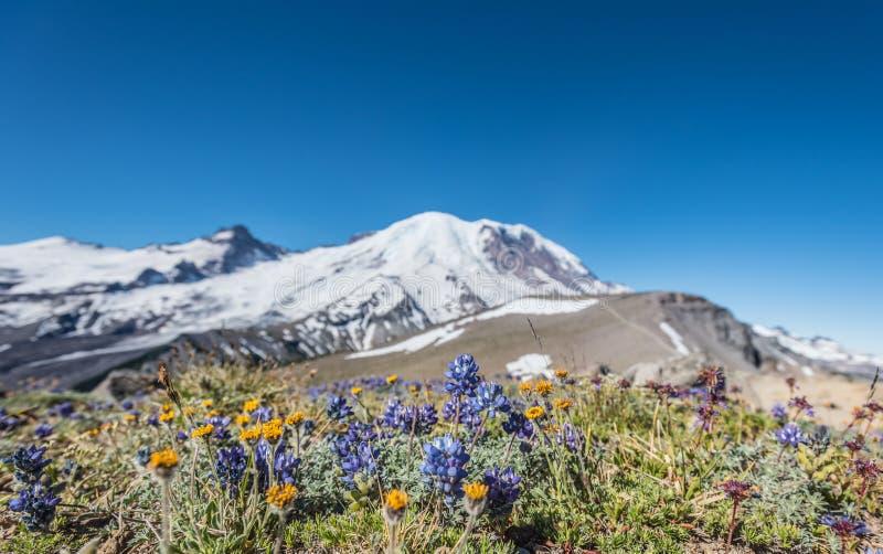 在干燥领域的野花在巴洛塔斯山前面 免版税图库摄影