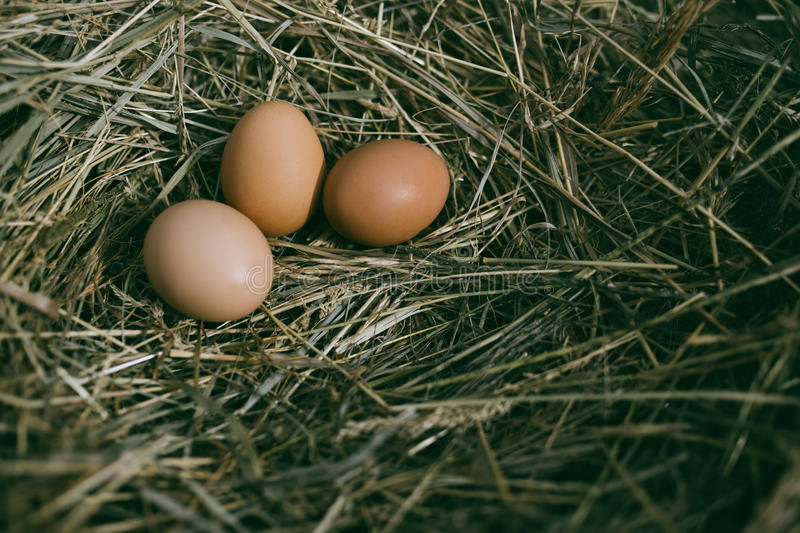 Download 在干草巢的鸡鸡蛋 库存图片. 图片 包括有 鸡蛋, 双翼飞机, 健康, 原始, 蛋白质, 嵌套, 秸杆, 有机 - 72370489