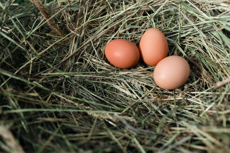 Download 在干草巢的鸡鸡蛋 库存图片. 图片 包括有 bataan, 健康, browne, 放置, 农村, 背包 - 72370495