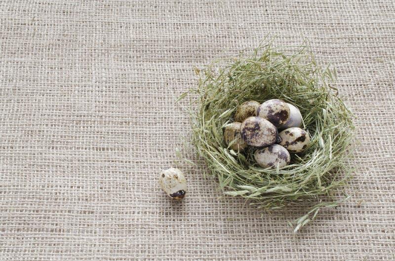 在干草巢的鹌鹑蛋在胡麻背景的  库存图片