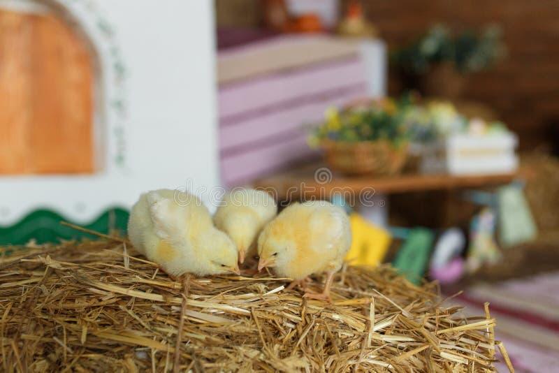 在干草的小的小鸡在传统乌克兰内部 免版税库存照片