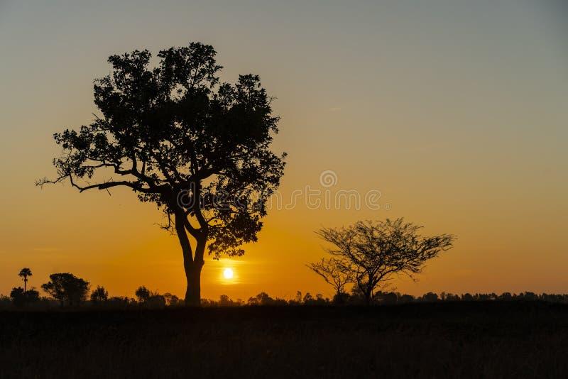 在干草领域的金黄美丽的日出明白和剪影树在乡下在早晨 免版税库存图片