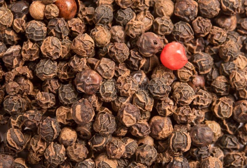 在干黑胡椒干胡椒的唯一红色干胡椒 免版税库存照片
