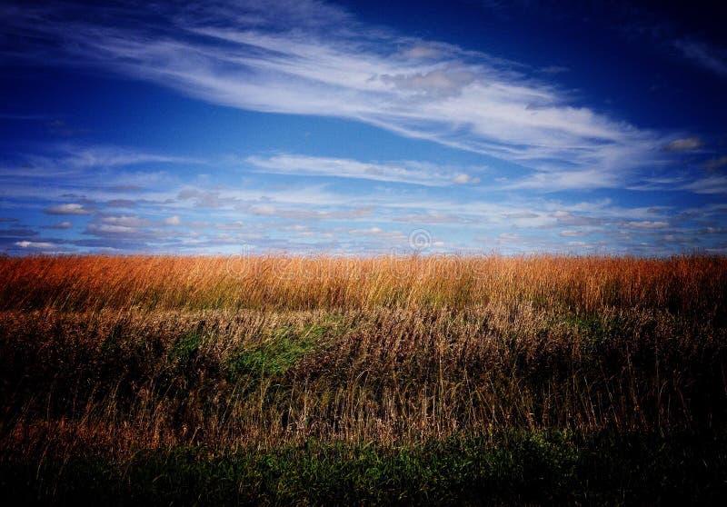在平原的秋天天际 免版税库存图片
