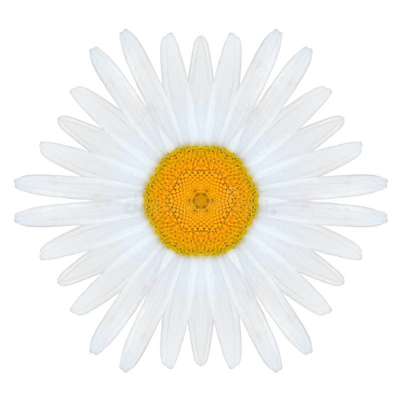 在平原隔绝的白色同心坛场雏菊花 免版税库存图片