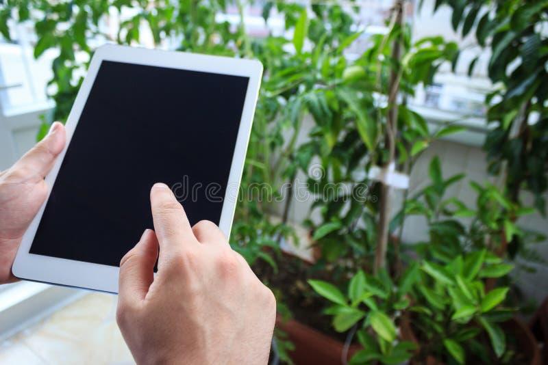在平板电脑的年轻人手在植物园里 免版税库存照片