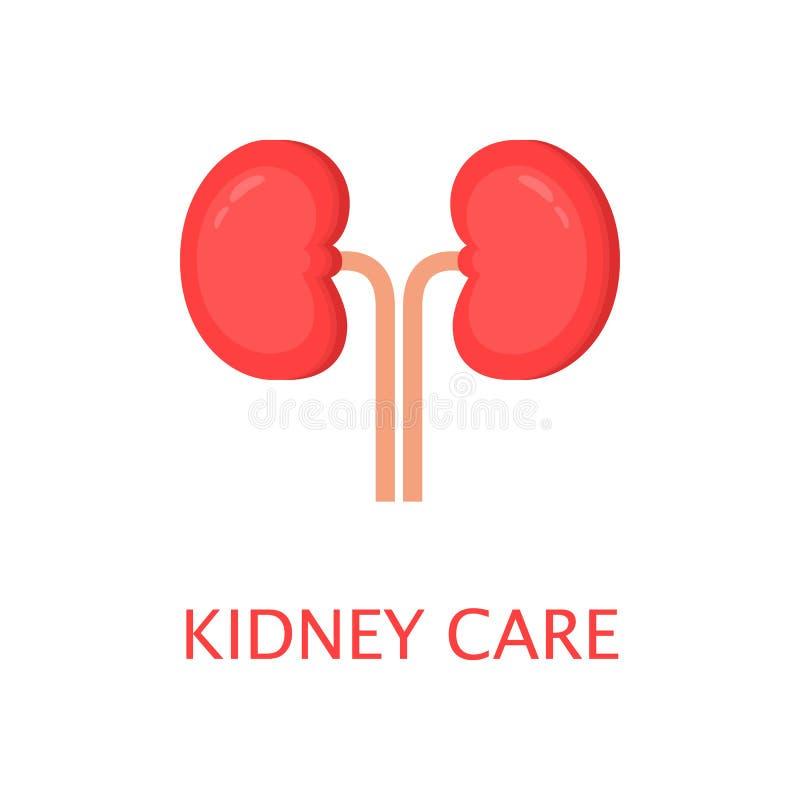 在平的样式的健康肾脏 左右肾脏 人的内脏 解剖学概念 世界肾脏天 逗人喜爱的动画片传染媒介 库存例证