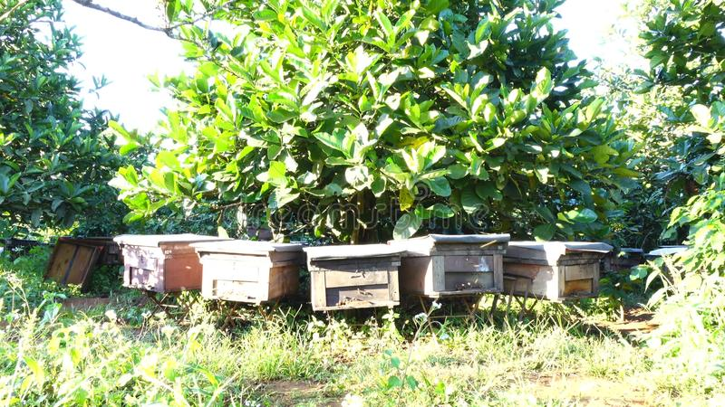 在平福省,越南的养蜂业 股票视频