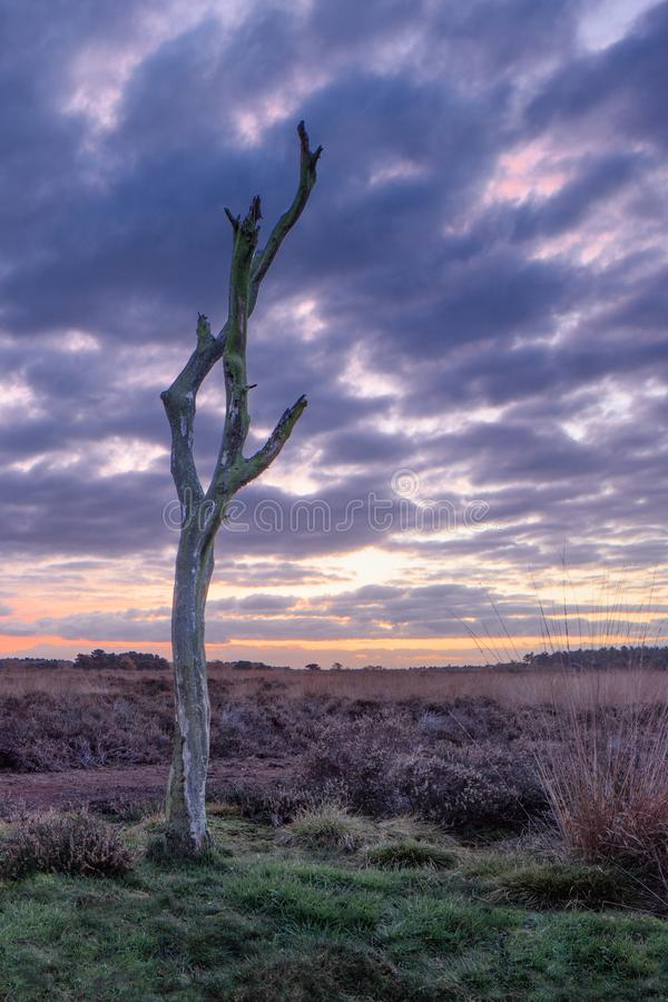 在平静的欧石南丛生的荒野的暮色场面,荷兰 免版税库存照片