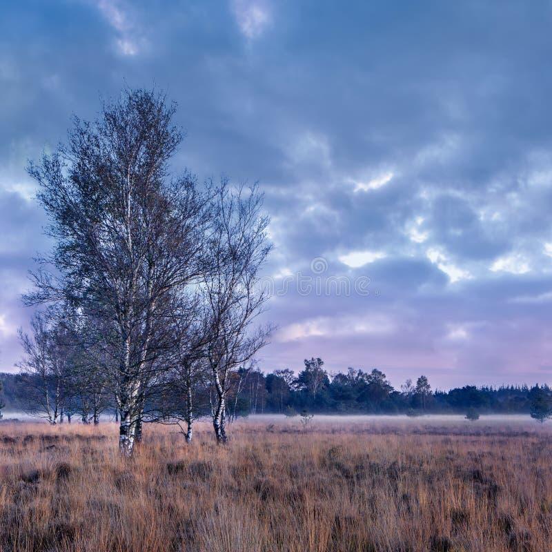 在平静的欧石南丛生的荒野的暮色场面,荷兰 库存图片