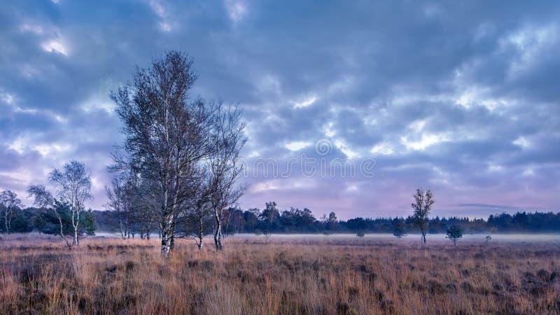 在平静的欧石南丛生的荒野的暮色场面,荷兰 库存照片