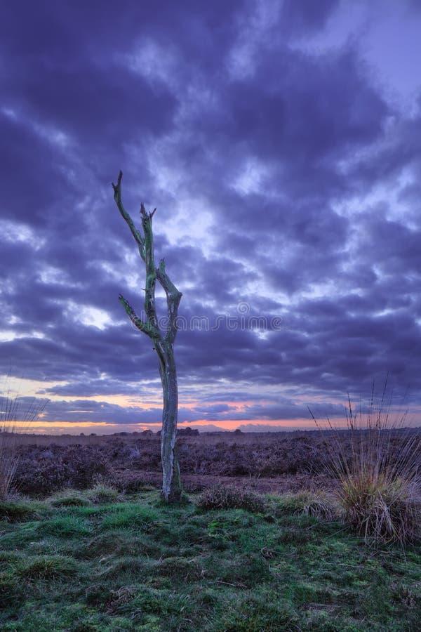 在平静的欧石南丛生的荒野的暮色场面, Goirle,荷兰 库存照片
