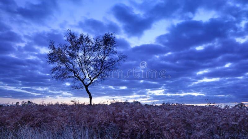 在平静的欧石南丛生的荒野的暮色场面, Goirle,荷兰 免版税库存照片