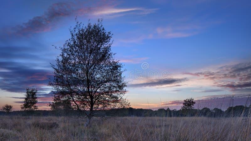 在平静的欧石南丛生的荒野的暮色场面 免版税库存图片