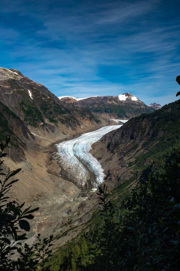 在庄严三文鱼冰川的头的前景的树构筑的一个详尽的看法在不列颠哥伦比亚省,加拿大, 免版税库存图片