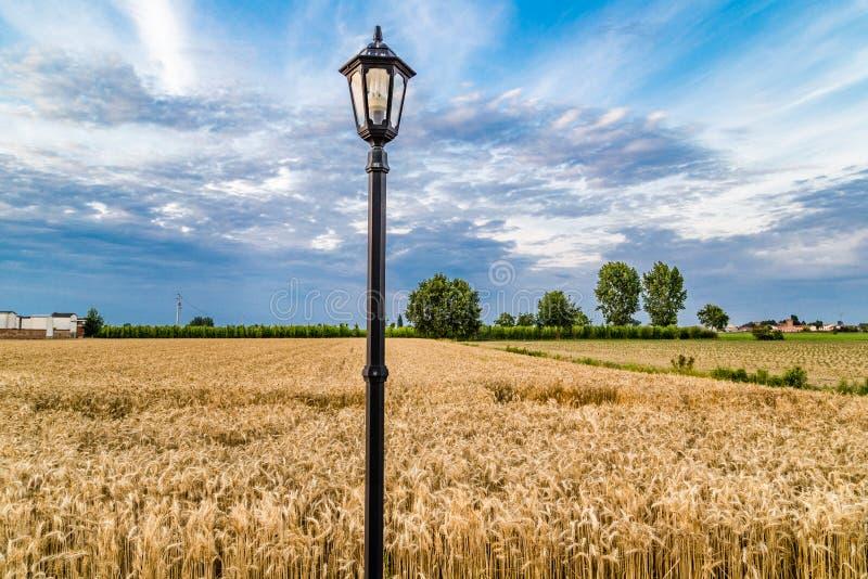 在庄稼前面的路灯柱 库存照片