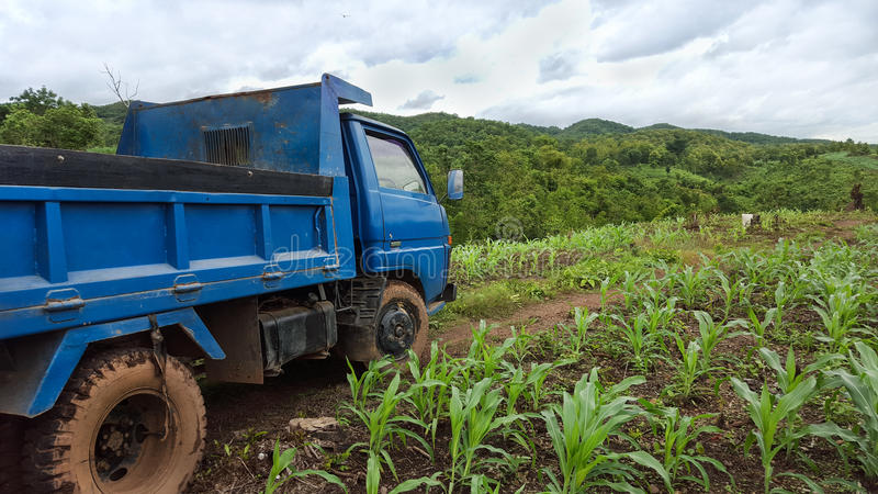 在庄稼领域的卡车 库存图片